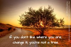If You Don't Like Where You Are, Change It; You're Not A Tree