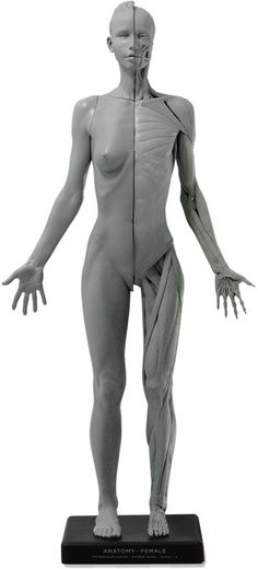 35 Best Anatomy Sculpture Images On Pinterest Anatomy Reference