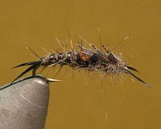 » Early Black Stonefly Nymph - Fly Fishing & Fly Tying Information Resource
