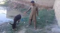 Boy Making Fun Of Sunny Deol Very Funny Video