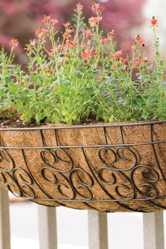 Show off your favorite potted plants in style! Made of powder-coated steel covered in a Brown finish, the 30'' Cameo Planter effortlessly blends into your outdoor décor.