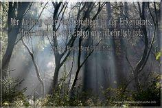 Weisheit - Lebenserfahrung in seiner höchsten Evolutionsstufe Die erste Erkenntnis: Niemand ist unentbehrlich auf Erden. Evolution, Inspiration, Life, Biblical Inspiration, Inspirational, Inhalation