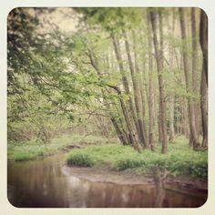 Mój las, moja rzeka, moje dzieciństwo...