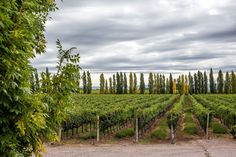 How to plan a visit to the Mendoza wine regions. Best wineries to visit in Maipu Valley, Lujan de Cuyo, and Uco Valley. Andes Mountains, Conquistador, Koh Tao, The Province, Mendoza, Wine Country, Vineyard, March, Tours