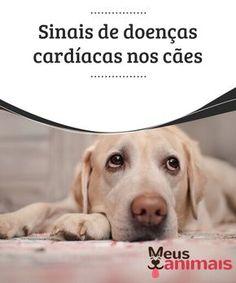 Sinais de doenças cardíacas nos cães Assim como os seres #humanos, os cães também podem vir a sofrer de #doenças #cardíacas. Saiba mais sobre o assunto! #Saúde