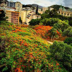 Parque Guinle-RJ