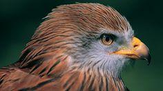 welsh wildlife - Google Search