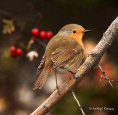 AVES EN OTOÑO / BIRDS IN AUTUMN Y 5