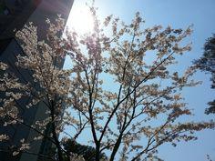 Shining for Spring