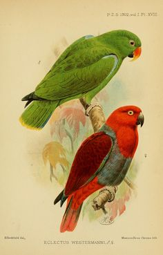 1902:v.1 (Jan.-Apr.) - Proceedings of the Zoological Society of London. - Biodiversity Heritage Library