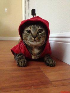 Thug cat Life - http://cutecatshq.com/cats/thug-cat-life/