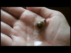 Snail Care Series #3 - Handling