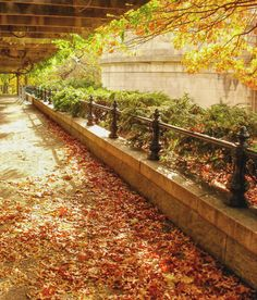 New York City - Autumn in Central Park - Fall Foliage
