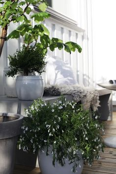 put a lime tree in the big pot in a sunny spot in your home and you are ready for Thai cooking any day of the week! Terrace Garden, Indoor Garden, Indoor Plants, Outdoor Gardens, Courtyard Gardens, Outdoor Life, Outdoor Rooms, Outdoor Living, Scandinavian Garden