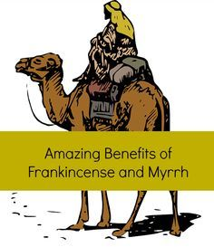 Frankincense and myrrh essential oil benefits, and how these ancient aromatics are becoming popular Frankincense Essential Oil Benefits, Essential Oil Uses, Doterra Essential Oils, Natural Essential Oils, Essential Oils For Cancer, Young Living Oils, Young Living Essential Oils, Arthritis, Bible