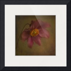 """""""Silence"""" by Priska Wettstein, Dawson City // anemone flower // Imagekind.com -- Buy stunning fine art prints, framed prints and canvas prints directly from independent working artists and photographers."""