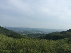 mother farm, 千葉県