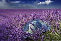 [title] - On the site you will find the best flowers, Pictures, Photos, Wallpapers Lavender Garden, Lavender Fields, Lavender Flowers, Colorful Flowers, Beautiful Flowers, Lavender Aesthetic, Cool Pictures, Beautiful Pictures, Malva