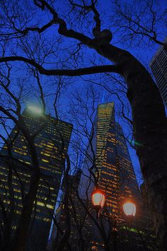 A cool NYC tree against the NYC buildings of night. New York City. Emily Stauring
