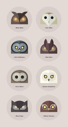 you know you have an obsession with owls when you know the names for half of these