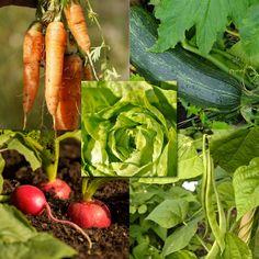 """kit de graines pour jardinier """"debutant"""" dans le potager Zucchini, Stuffed Peppers, Kit, Vegetables, Food, Seeds, Backyard Farming, Stuffed Pepper, Essen"""
