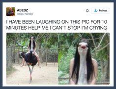 32 Bilder, die dich entweder zum Lachen oder zum Weinen bringen werden
