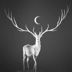 Black and White horror moon dark edited not mine darkness deer witchcraft occultism sumbolic horned