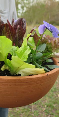 Beginning gardener? Grow your own salad! Start by picking your favorite lettuce and add flowers for color variety in the container. Click in for additional ideas on pots, soil and design.