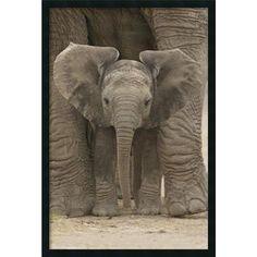 Big Ears - Baby Elephant' Framed Art Print with Gel Coated Finish