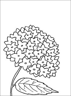 hydrangea coloring and printable page coloring pages