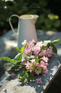 Raindrops and Roses Love Flowers, Fresh Flowers, Beautiful Flowers, Narcisse, Grandmas Garden, Raindrops And Roses, Vibeke Design, Pink Garden, Simple Pleasures