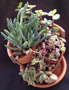 DIY broken flower pot