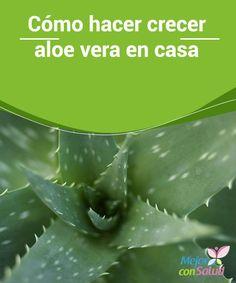 Cómo hacer crecer aloe vera en casa  Aloe vera o sábila, cualquier de los nombres es válido para esta planta. No importa cómo lo conozcas: sus propiedades, componentes y beneficios para el organismo no dejarán de ser los mismos.