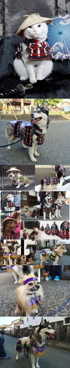 A Japanese shop has created handsome suits of samurai armor for both cats and dogs. A war between cats and dogs is beginning...
