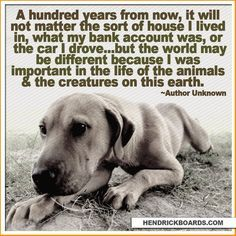 sentiments for an animal lover - Google Search