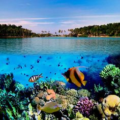 underwater_0013.jpg (1000×1000)