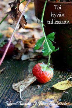 RunoTalon voimapuutarha: Voimakortit viikko 38: Pieniä ihmisiä
