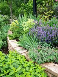 20 Secrets to Landscape Success. Play up contrasts The eye loves contrasts. Texture, color and shape can all provide contrast in a garden. Here, salvias, azaleas, miniature bearded irises and Euonymus shroud retaining walls. Steep Backyard, Backyard Landscaping, Landscaping Ideas, Terraced Landscaping, Hillside Garden, Terrace Garden, Sloping Garden, Walled Garden, Cool Plants