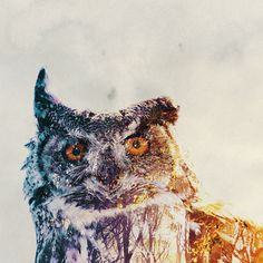 Beautiful double exposure photos blend animals with their habitats- by Andreas Lie