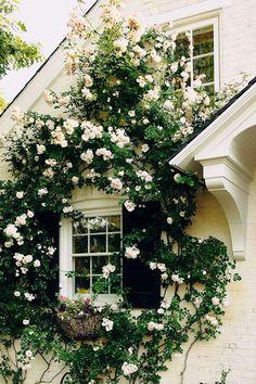 Bom dia!   Hoje vamos deixar a agitação  lá fora e despertar os sentidos com flores perfumadas, com suas cores e formas delicadas. O amor p...