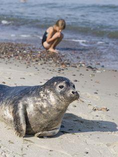 seal ashore Baltic sea city Kaliningrad Russia 2012