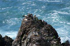 Cabo Sardão, Portugal | Cegonhas nas escarpas do Cabo Sardão