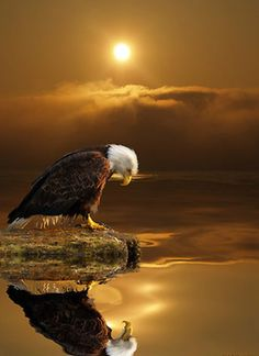An eagle is a free spirit,to me it means, freedom and strength!