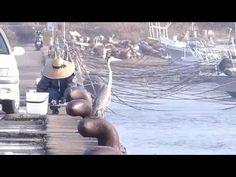 鹿児島市の風景|木材港のアオサギと釣りおじさんの微妙な関係 Shot by LUMIX FZ200