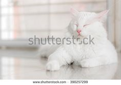 White cat is sleeping with copy space