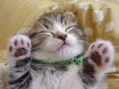 Sshhh! Don't wake kitty…