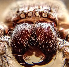 Wake up this is under your bed!  #macro by the brave @dan_mab! #squidcammacro #arachnophobia   Tag someone who is arachnophobic!