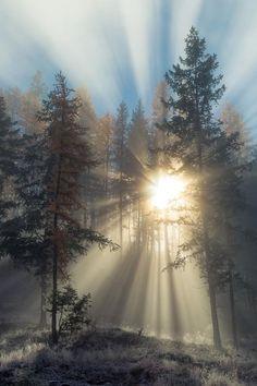 Sunrise Sunbeams