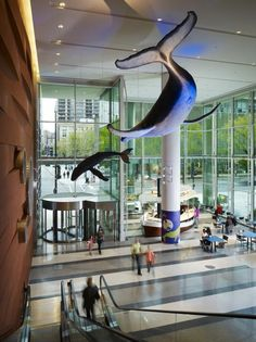 The lower-level lobby is home to this near-life-size replica of a mother whale and her calf donated by the Shedd Aquarium. Photo credit: Nick Merrick © Hedrich Blessing.