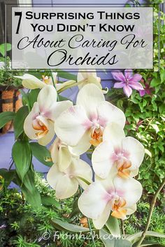 7 Surprising Things You Didn't Know About Caring For Orchids | Love orchids but afraid that they're too hard to grow? They're not! Click here to see 7 surprising things you didn't know about caring for orchids.